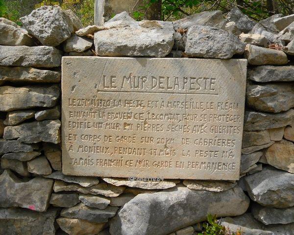 Plaque explicative du mur de la peste à Cabrières d'Avignon