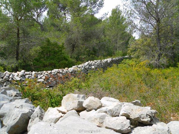 Mur de la peste à Cabrières d'Avignon