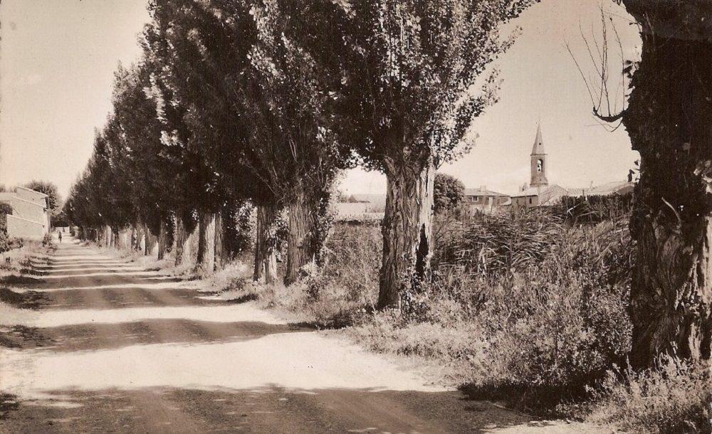 Violès en 1955