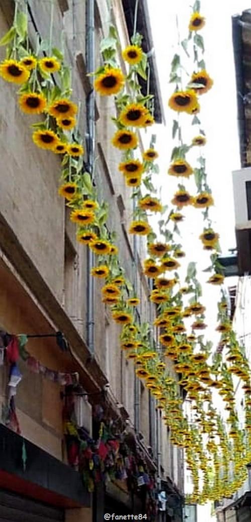 Tournesols à Avignon