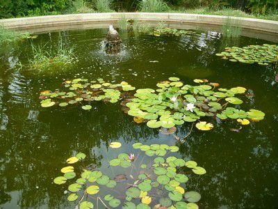 Grand bassin circulaire agrémenté d'une fontaine