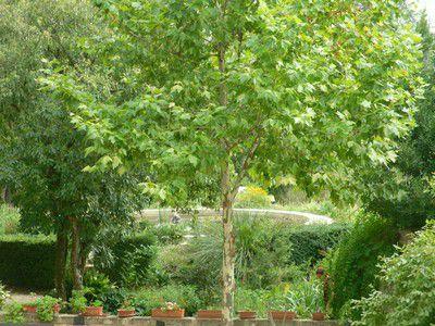 Magnifique vu du jardin d'agrément de Jean-Henri Fabre. Au fond, nous voyons le bassin circulaire