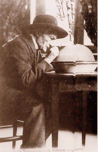 Jean-Henri Fabre en plein travail