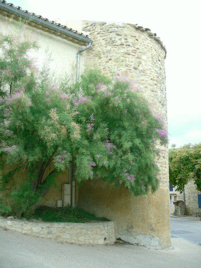 Jolie rue à Saint Romain en Viennois