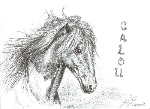 Portrait de Calou (A4)