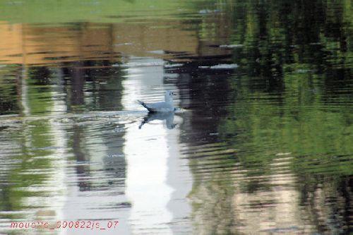 reflets (étang du Dirigeable - 1170 Boisfort)