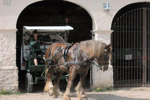 Cheval et Forêts : attelage ; manoeuvre marche arrière