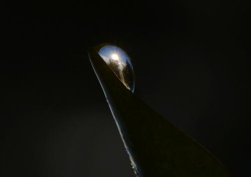 Sunbird-bulles 04-01-15 046bis (Copy).jpg