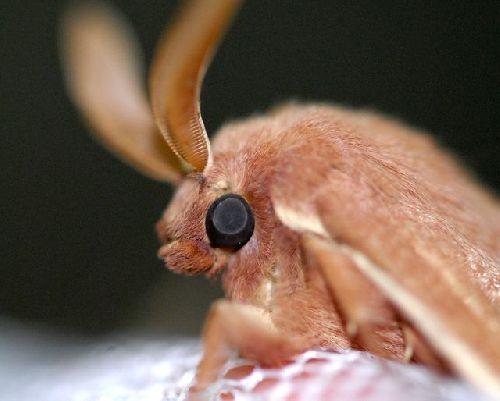 Papillon de nuit 1