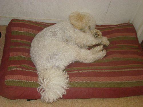 Cookie...Très fatigué ...