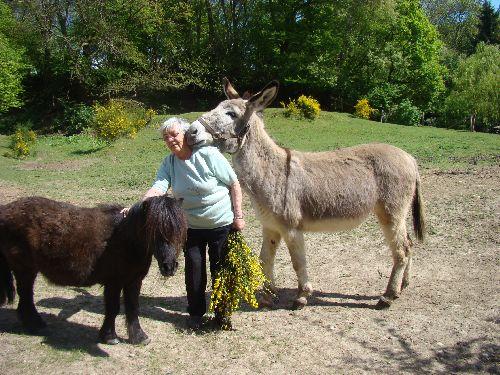 Ma mère s\'est fait une nouvelle copine...Une ânesse du Cotentin, hyper câline !