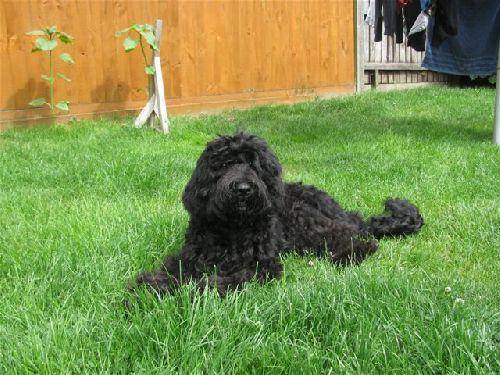 Darcy, fille de Caya et Bepop, 7 mois.