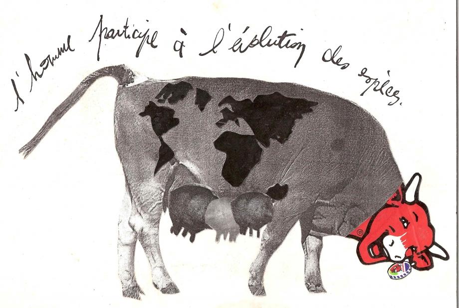 vache folle 1992.jpg