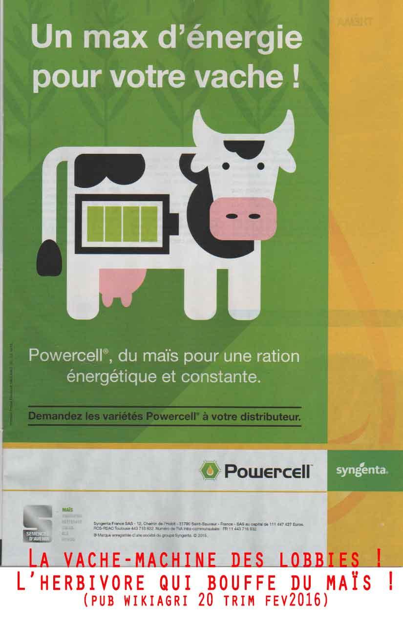 vache-macuine-de-sygenta.jpg