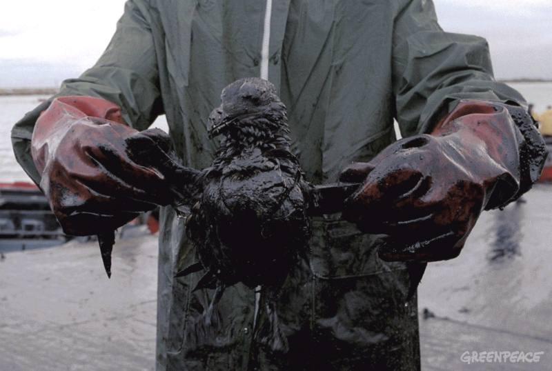 a-oil-cleanup-volunteer-holds.jpg