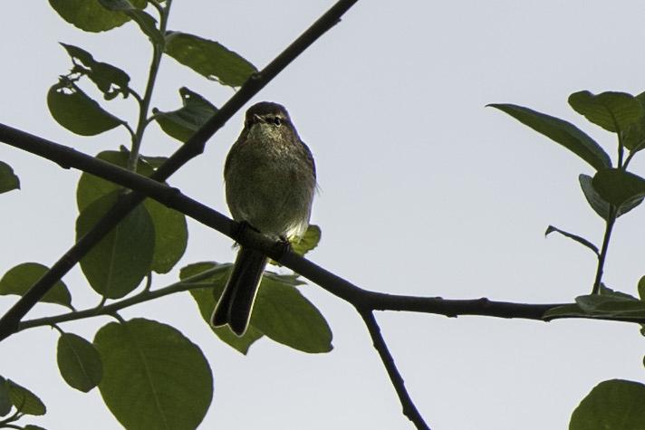 P'tit oiseau 3 bis.jpg