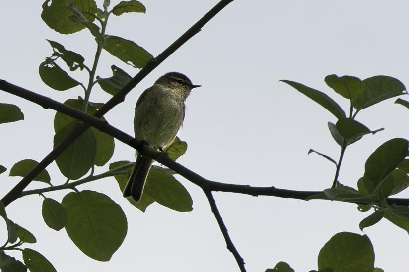 P'tit oiseau 4 bis.jpg
