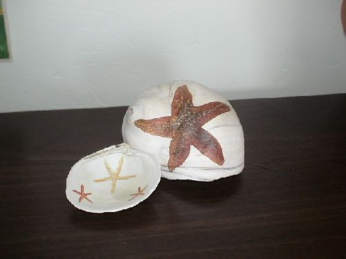 coquillages avec étoiles de mer
