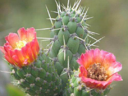 Oh le joli cactus