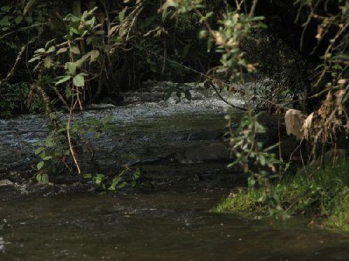 Los Chilos- Il faudra remonter la rivière