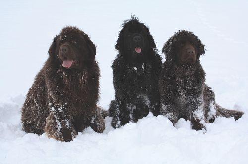 Mes trois ours dans la neige ! ( janvier 2010 )