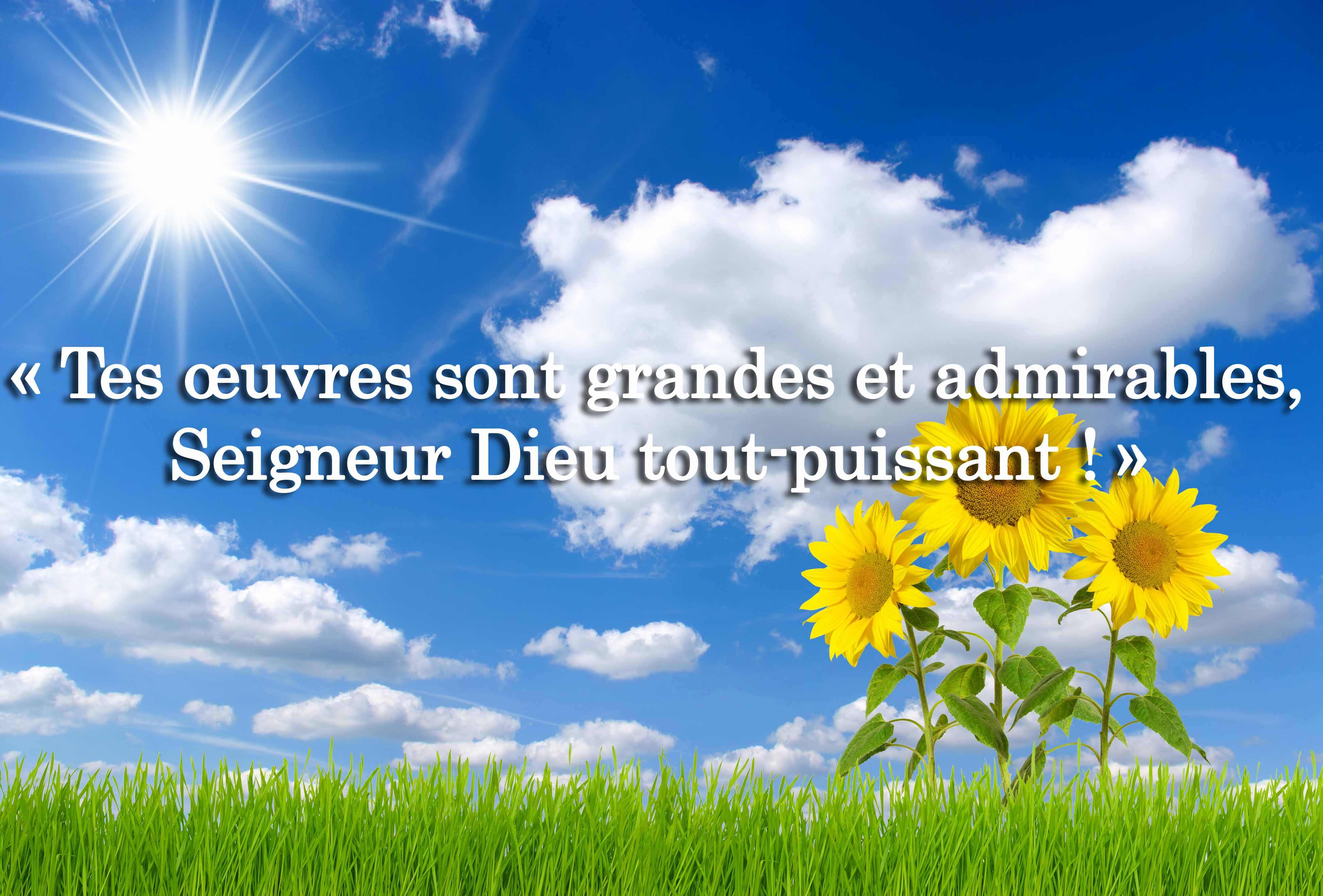 Tes oeuvres sont admirables