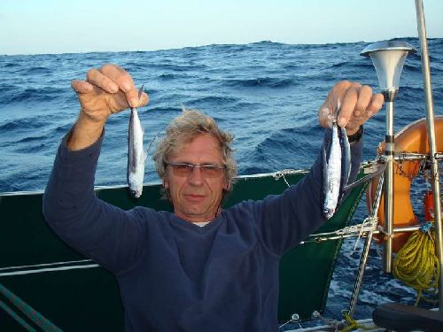 On en a trouvé 4 echoués le matin dernier jour de nav avant d\'arriver au Cap Vert