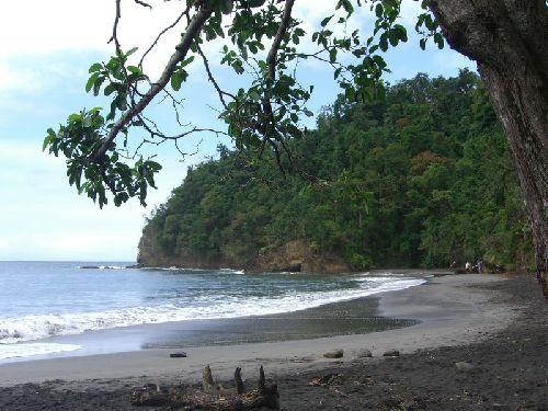 L\'anse couleuvre tout an nord de l\'ile, belle plage de sable noir dans la foret equatoriale