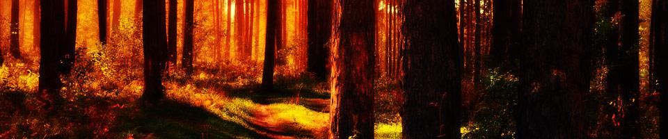 Trésors des bois