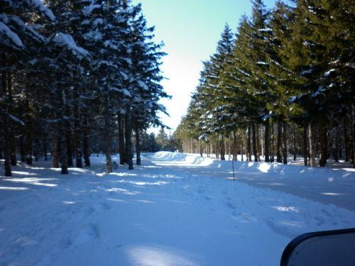En suivant la route toute tracée dans le bois