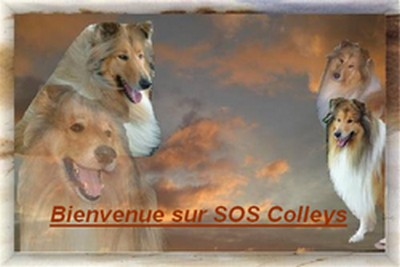Bienvenue sur sos colleys 400x260.jpg