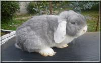 Droopyland: la pasison du lapin nain