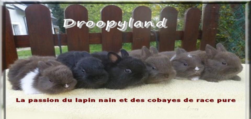 Droopyland: Lapins nains