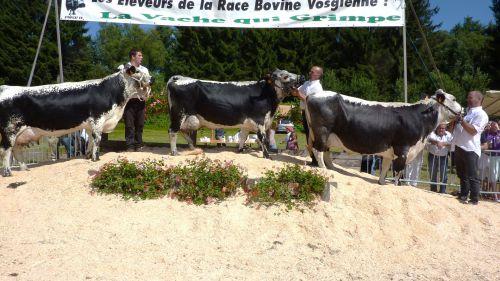 1er prix Lot d'élevage:      SNC  L'ENVERS  DES  GRAVIERS      88    SAULXURES