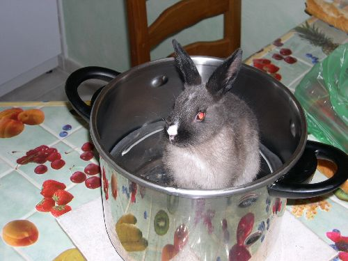 03/04/2005  Mon petit lapin Pépite