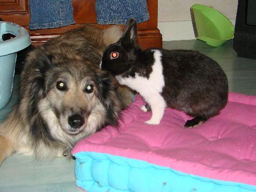 Le lapin qui parler à l\'oreille du chien!!