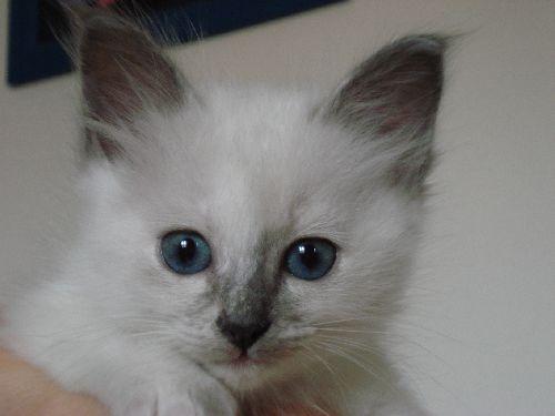 stella chaton de 5 semaines