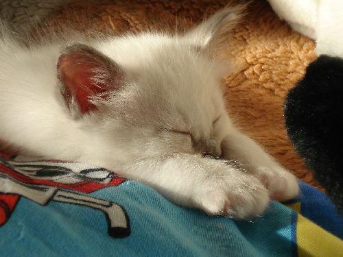 je dors toujours comme un petit sphynx.