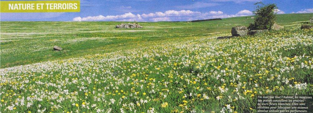 prairies aubrac.jpg