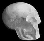 Le faux crâne de cristal de la Smithsonian Institution de Washington