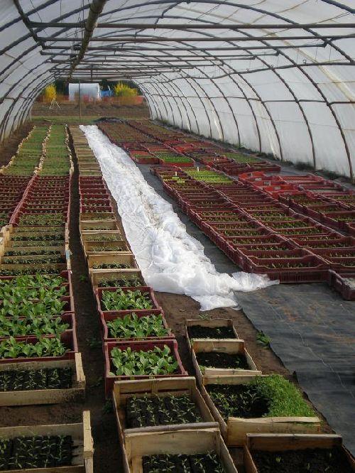Divers plants attendent au chaud