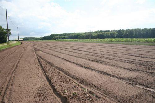 Le champ est prêt pour le repiquage des poireaux
