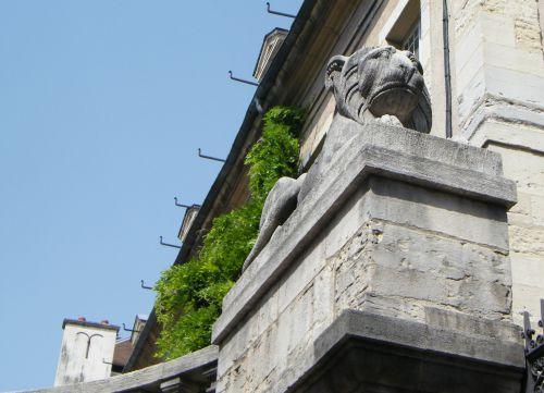 Dijon rue Chabot-Charny - Lion allongé