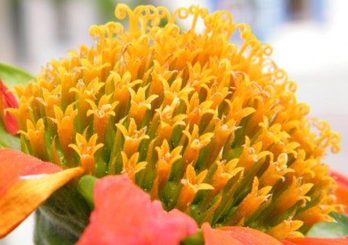Flore de Dijon