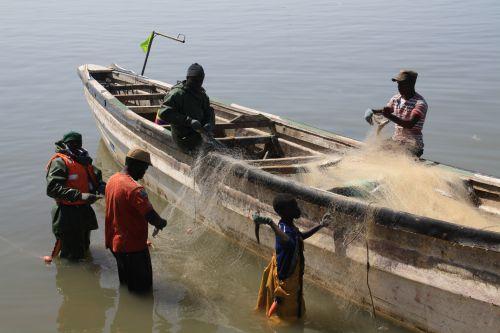 Senegal Saint Louis le marché aux poissons