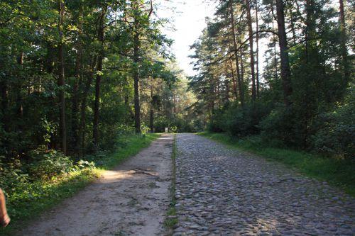 TREBLINKA route menant au Mémorial