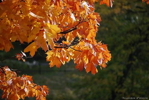 équinoxe automne.jpg