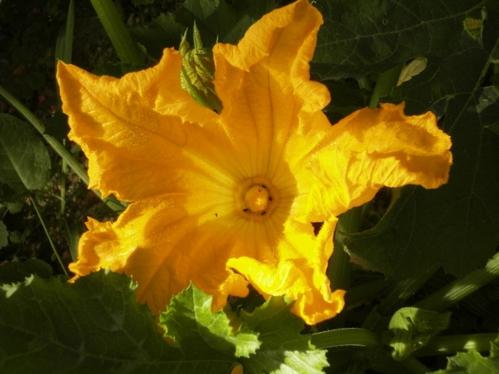 C-est-aussi-une-jolie-fleur (Copier).jpg