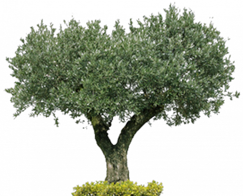 olivier (Copier).png