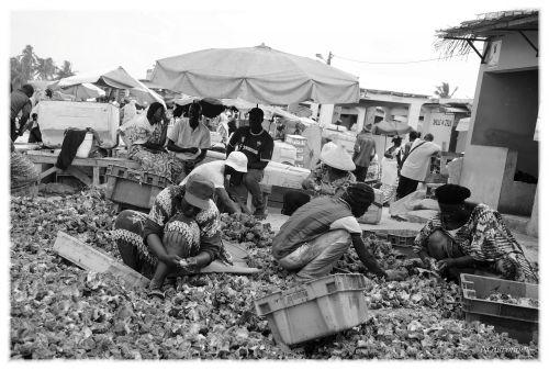 Nettoyeuses de coquillages